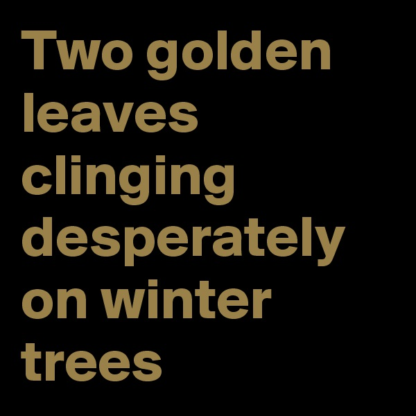 Two golden leaves clinging desperately on winter trees
