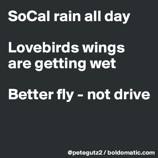 SoCal rain all day  Lovebirds wings are getting wet  Better fly - not drive