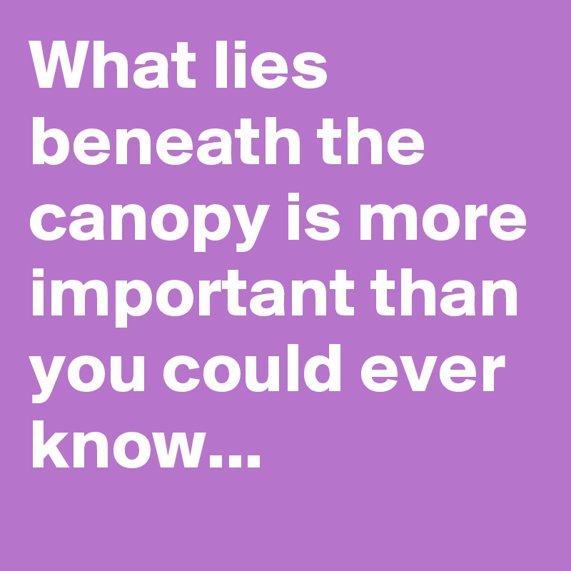 What lies beneath the canopy is more important than you could ever know...