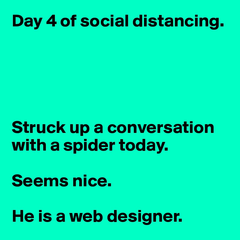 Day 4 of social distancing.      Struck up a conversation with a spider today.  Seems nice.  He is a web designer.