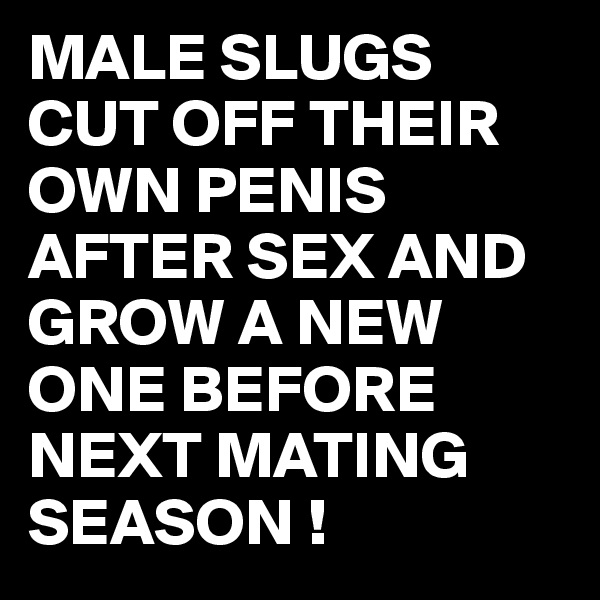 MALE SLUGS CUT OFF THEIR OWN PENIS AFTER SEX AND GROW A NEW ONE BEFORE NEXT MATING SEASON !