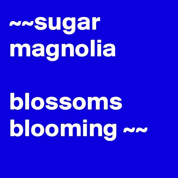 ~~sugar magnolia  blossoms blooming ~~