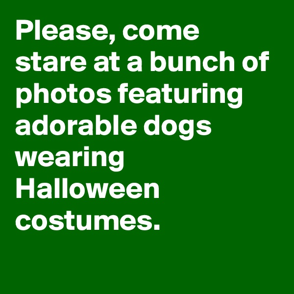 Please, come stare at a bunch of photos featuring adorable dogs wearing Halloween costumes.