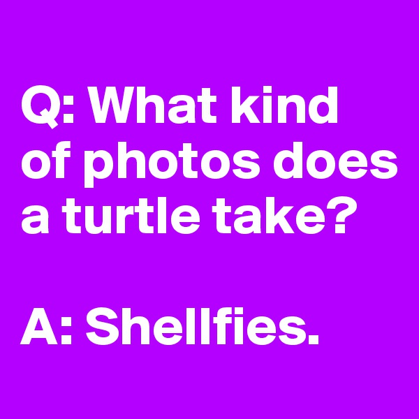 Q: What kind of photos does a turtle take?   A: Shellfies.