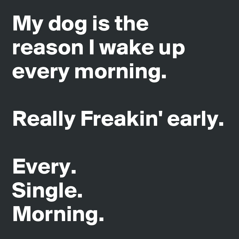 My dog is the reason I wake up every morning.  Really Freakin' early.  Every. Single.  Morning.