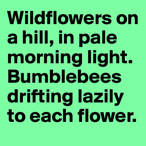 Wildflowers on a hill, in pale morning light. Bumblebees drifting lazily to each flower.