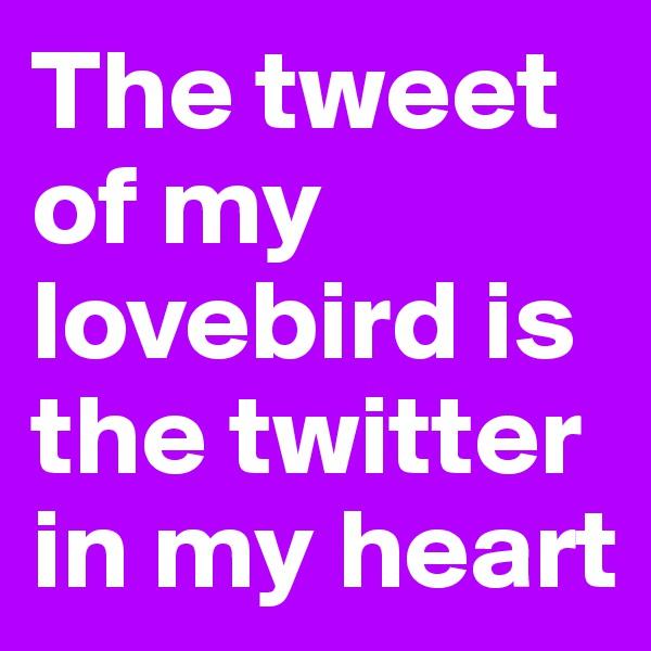 The tweet of my lovebird is the twitter in my heart