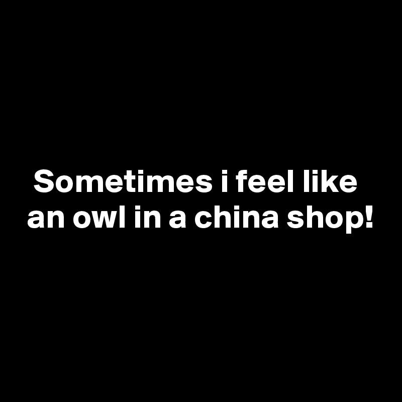 Sometimes i feel like  an owl in a china shop!