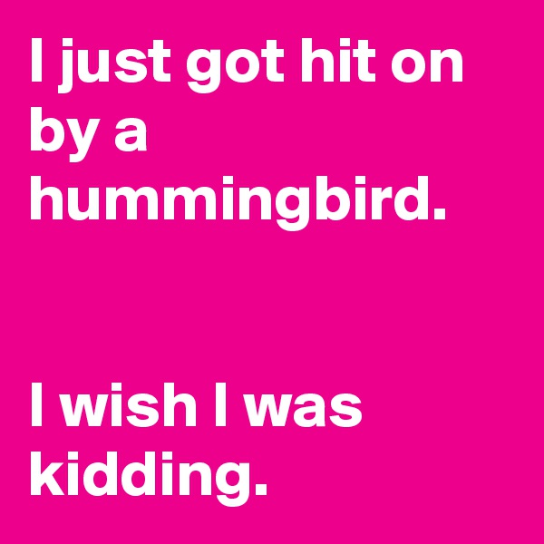 I just got hit on by a hummingbird.   I wish I was kidding.