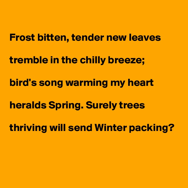 Frost bitten, tender new leaves   tremble in the chilly breeze;  bird's song warming my heart   heralds Spring. Surely trees  thriving will send Winter packing?
