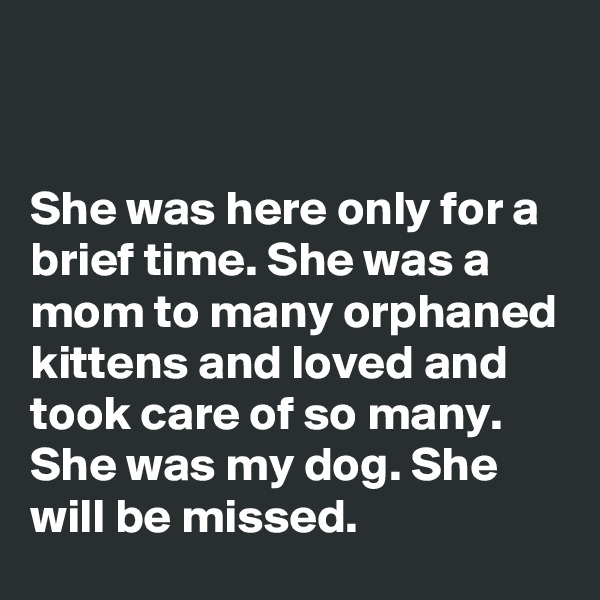 She was here only for a brief time. She was a mom to many orphaned kittens and loved and took care of so many. She was my dog. She will be missed.