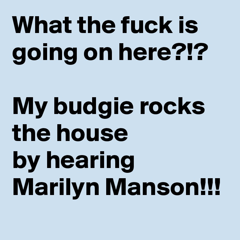 What the fuck is going on here?!?  My budgie rocks the house by hearing Marilyn Manson!!!
