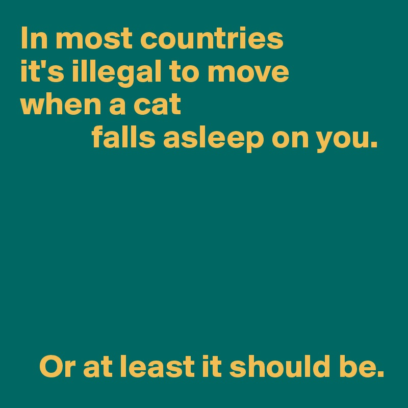 In most countries  it's illegal to move when a cat            falls asleep on you.          Or at least it should be.
