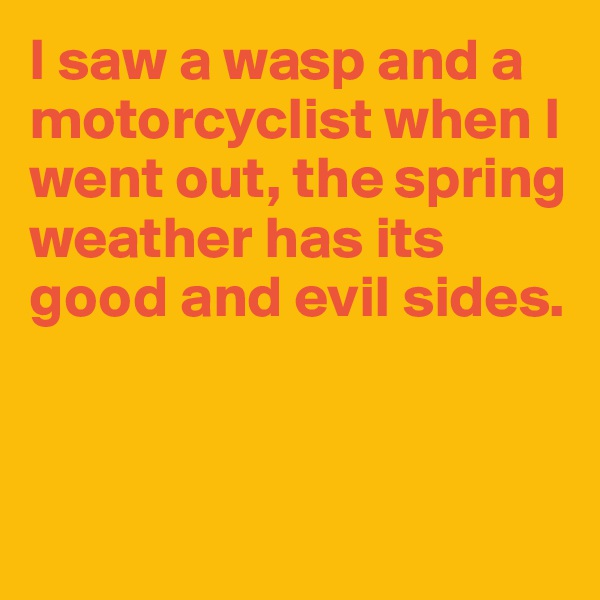 I saw a wasp and a motorcyclist when I went out, the spring weather has its good and evil sides.