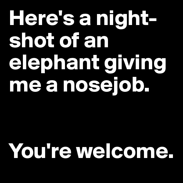 Here's a night-shot of an elephant giving me a nosejob.    You're welcome.