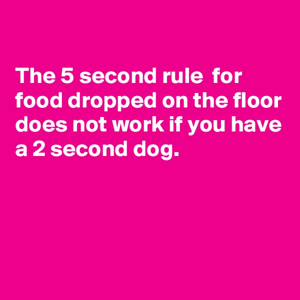 The 5 second rule  for food dropped on the floor does not work if you have a 2 second dog.