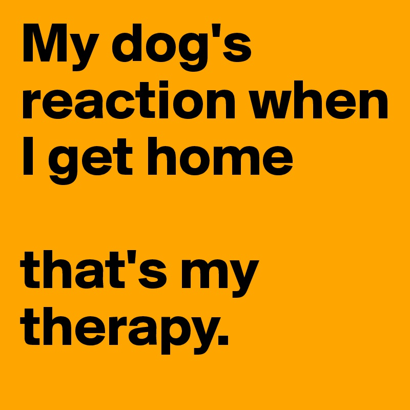 My dog's reaction when I get home  that's my therapy.