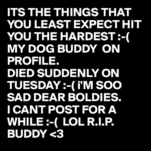 ITS THE THINGS THAT YOU LEAST EXPECT HIT YOU THE HARDEST :-( MY DOG BUDDY  ON PROFILE. DIED SUDDENLY ON TUESDAY :-( i'M SOO SAD DEAR BOLDIES. I CANT POST FOR A WHILE :-(  LOL R.I.P. BUDDY <3