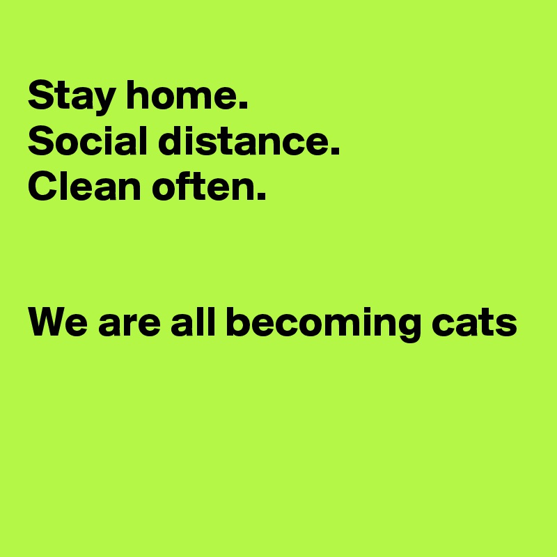 Stay home. Social distance. Clean often.   We are all becoming cats
