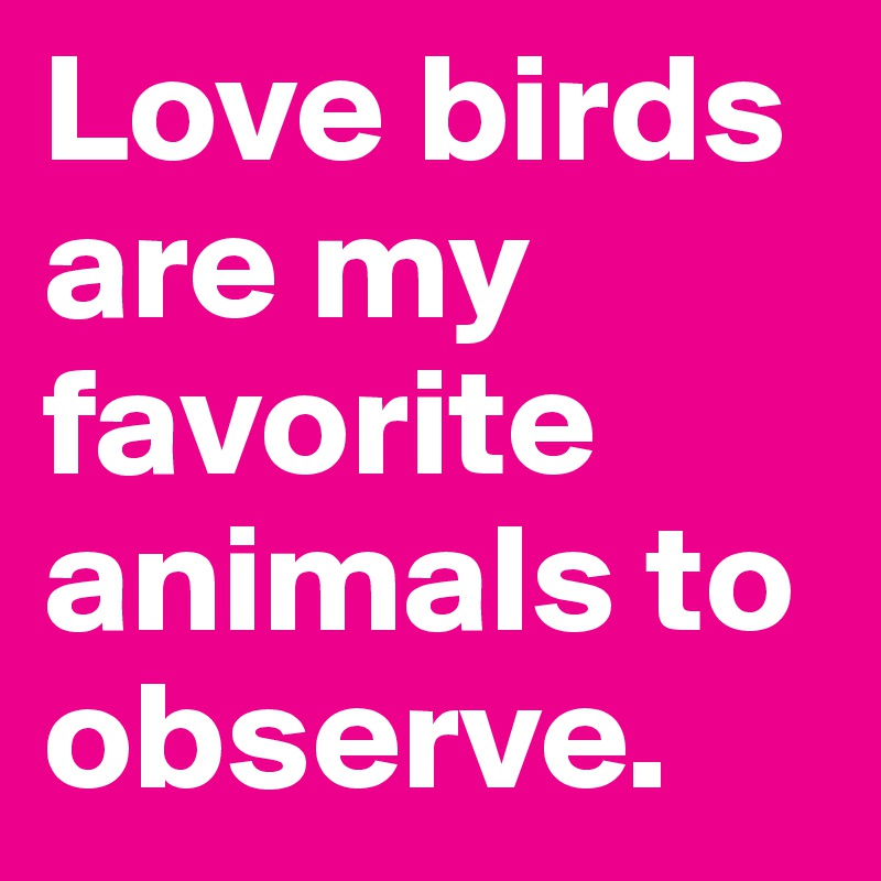 Love birds are my favorite animals to observe.