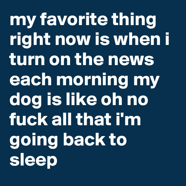my favorite thing right now is when i turn on the news each morning my dog is like oh no fuck all that i'm going back to sleep