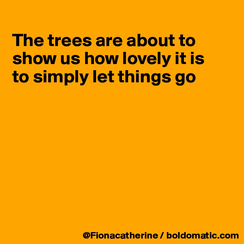 The trees are about to show us how lovely it is to simply let things go
