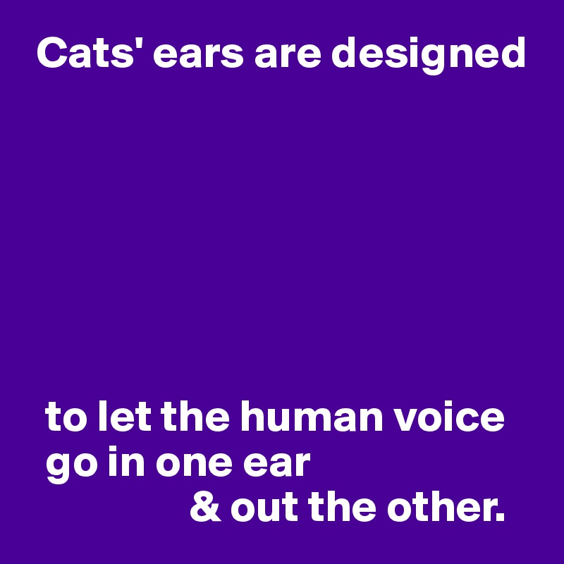 Cats' ears are designed          to let the human voice    go in one ear                   & out the other.