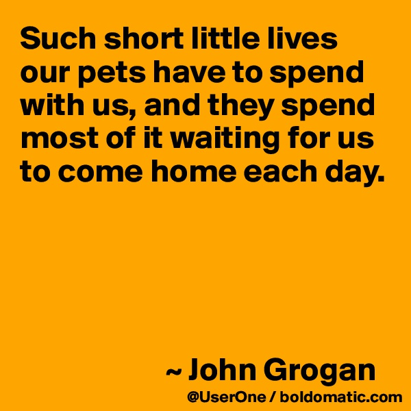 Such short little lives our pets have to spend with us, and they spend most of it waiting for us to come home each day.                            ~ John Grogan