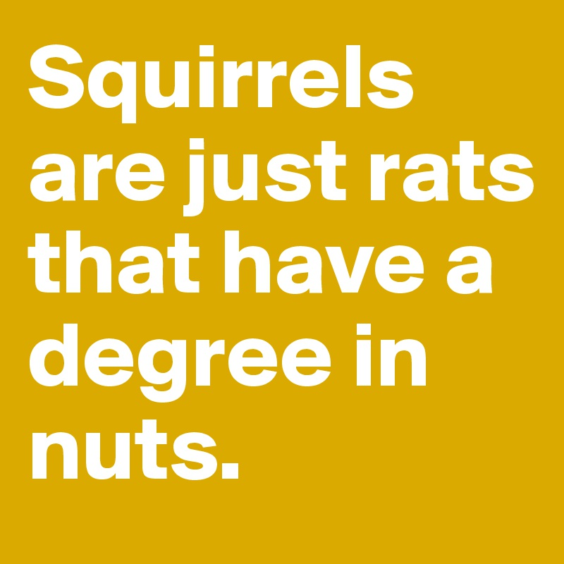 Squirrels are just rats that have a degree in nuts.