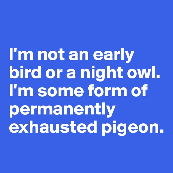 I'm not an early bird or a night owl. I'm some form of permanently exhausted pigeon.