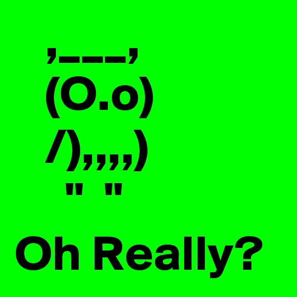 """,___,    (O.o)    /),,,,)      """"  """" Oh Really?"""