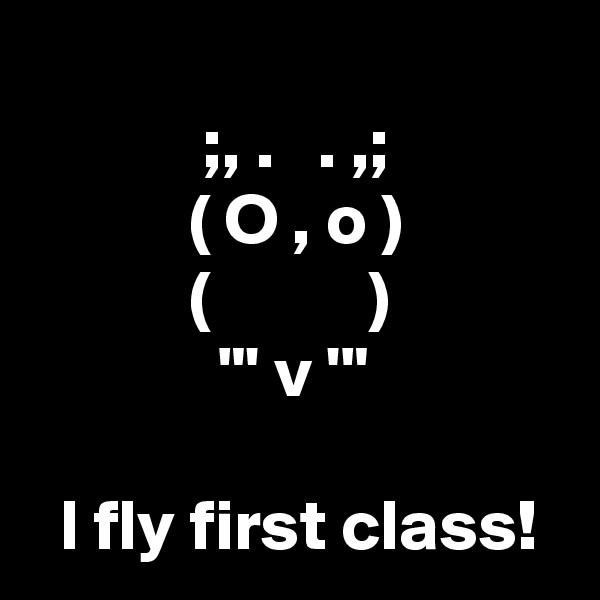 ";, .   . ,;            ( O , o )            (           )              ""' v '""    I fly first class!"