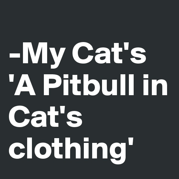 -My Cat's 'A Pitbull in Cat's clothing'