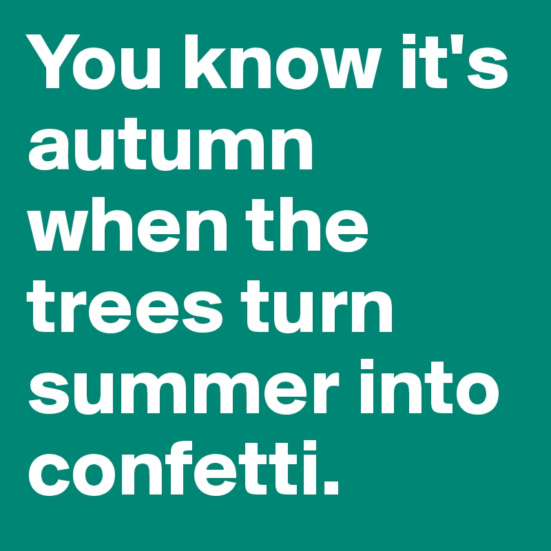 You know it's autumn when the trees turn summer into confetti.