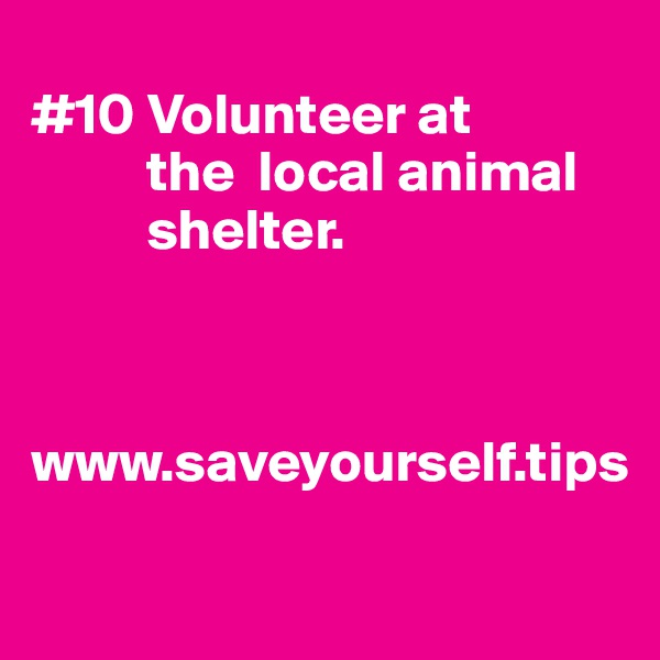#10 Volunteer at              the  local animal            shelter.    www.saveyourself.tips