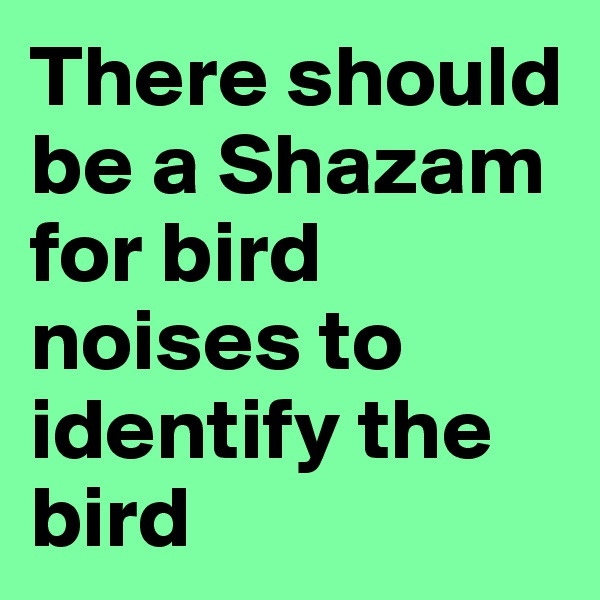 There should be a Shazam for bird noises to identify the bird