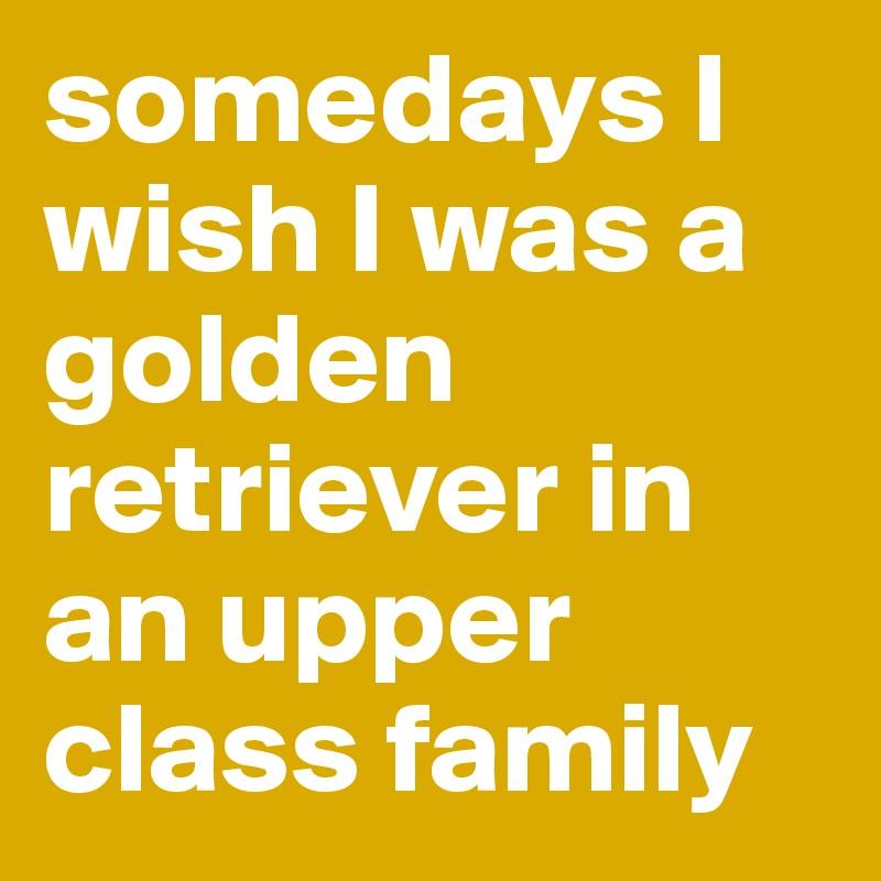 somedays I wish I was a golden retriever in an upper class family