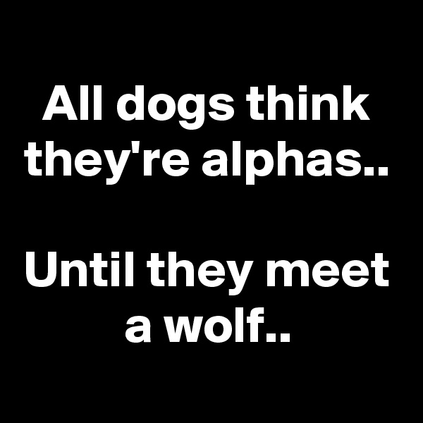 All dogs think they're alphas..  Until they meet a wolf..