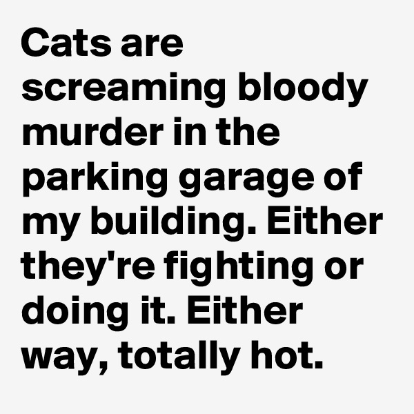 Cats are screaming bloody murder in the parking garage of my building. Either they're fighting or doing it. Either way, totally hot.
