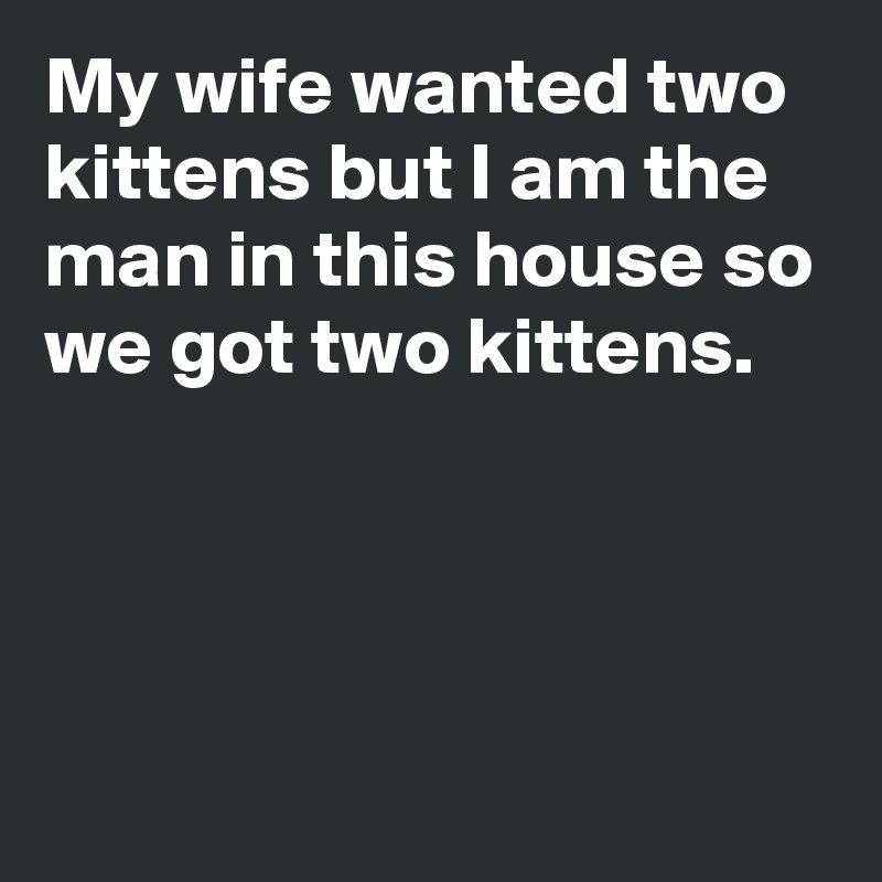My wife wanted two kittens but I am the man in this house so we got two kittens.