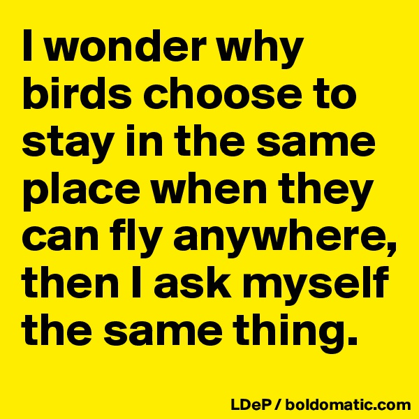 I wonder why birds choose to stay in the same place when they can fly anywhere, then I ask myself the same thing.