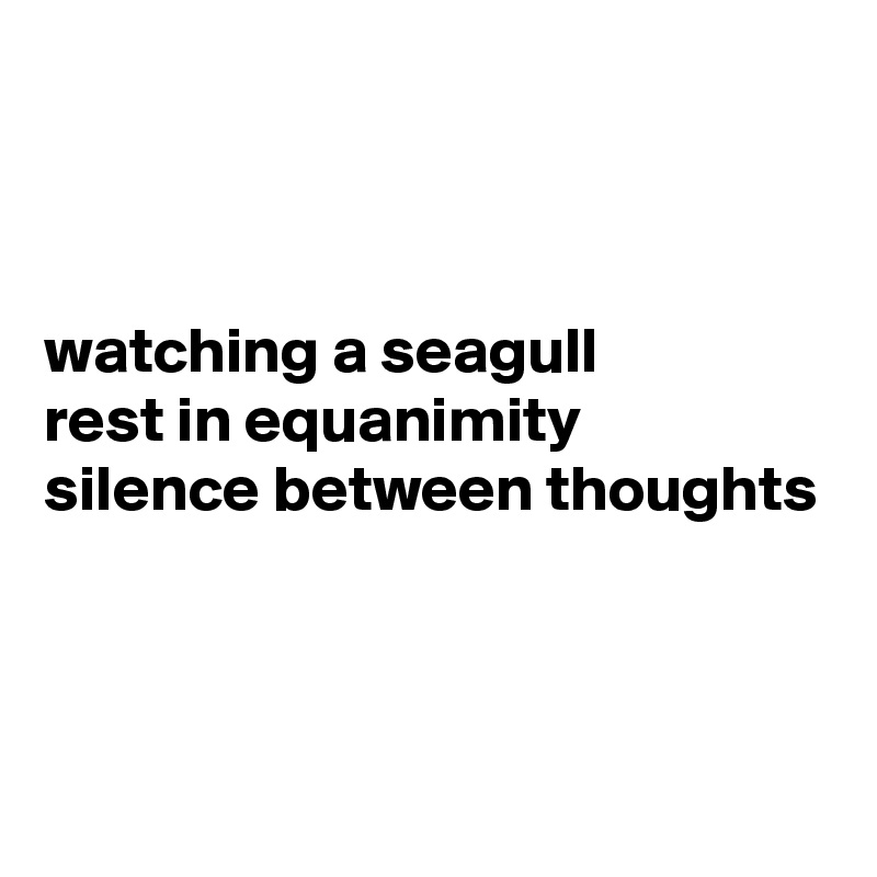 watching a seagull  rest in equanimity  silence between thoughts
