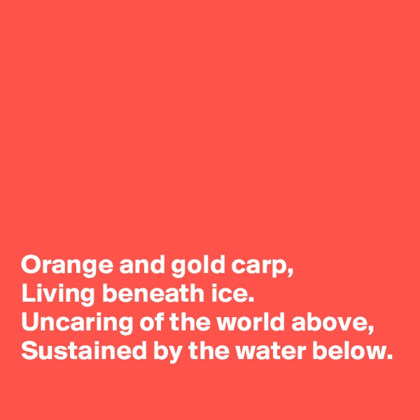Orange and gold carp, Living beneath ice. Uncaring of the world above, Sustained by the water below.