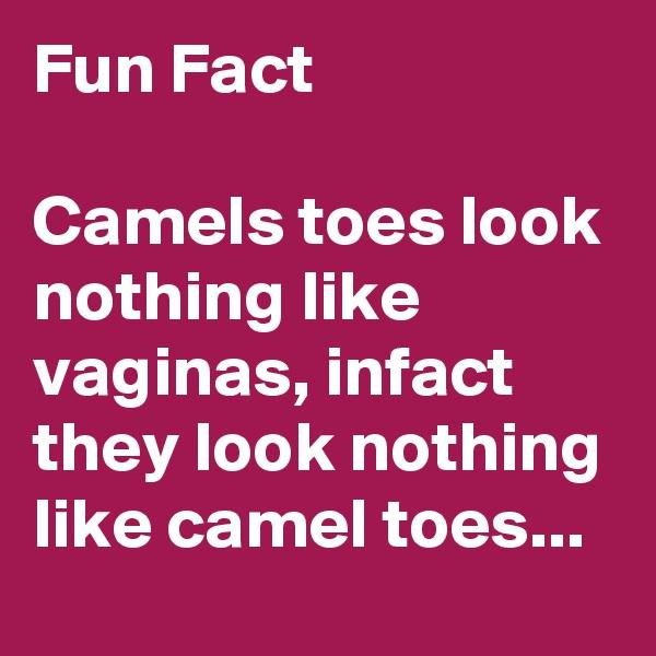 Fun Fact  Camels toes look nothing like vaginas, infact they look nothing like camel toes...