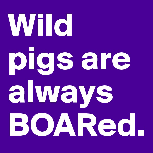 Wild pigs are always BOARed.