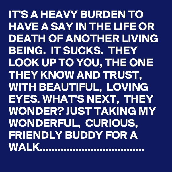 IT'S A HEAVY BURDEN TO HAVE A SAY IN THE LIFE OR DEATH OF ANOTHER LIVING BEING.  IT SUCKS.  THEY LOOK UP TO YOU, THE ONE THEY KNOW AND TRUST,  WITH BEAUTIFUL,  LOVING EYES. WHAT'S NEXT,  THEY WONDER? JUST TAKING MY WONDERFUL,  CURIOUS,  FRIENDLY BUDDY FOR A WALK...................................