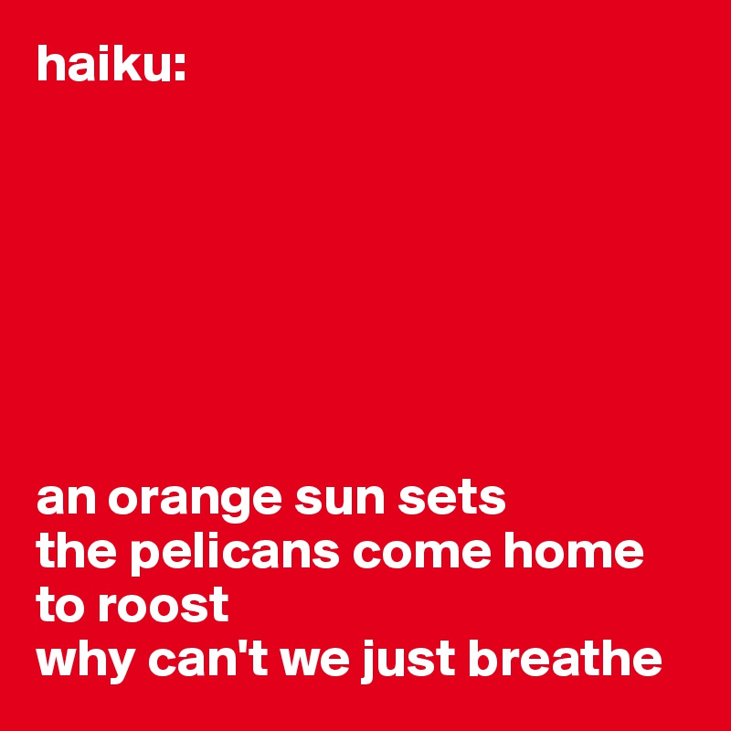 haiku:        an orange sun sets the pelicans come home to roost why can't we just breathe