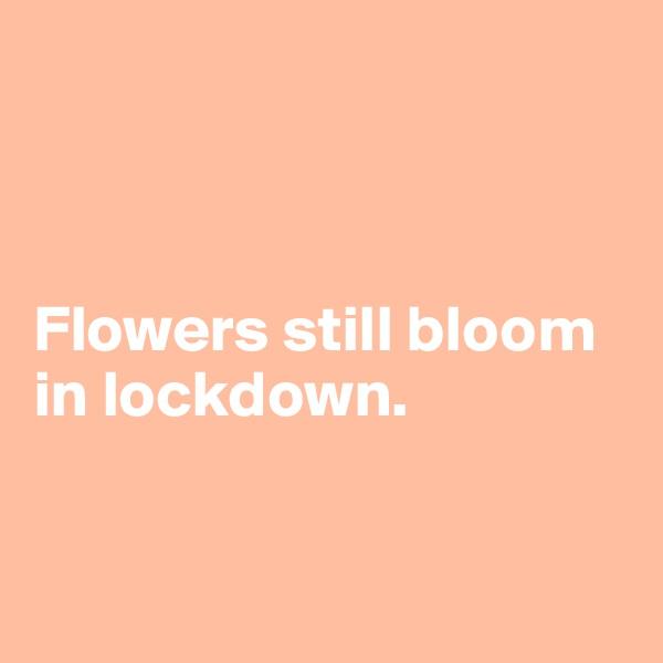 Flowers still bloom in lockdown.