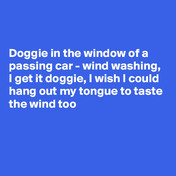 Doggie in the window of a passing car - wind washing, I get it doggie, I wish I could hang out my tongue to taste the wind too