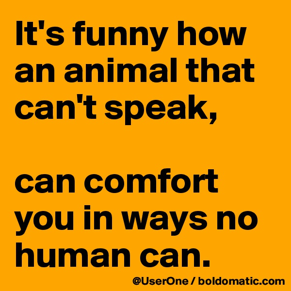 It's funny how an animal that can't speak,  can comfort you in ways no human can.